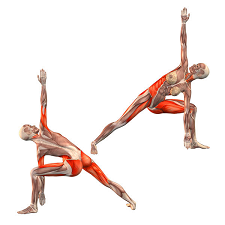 Bent Knee Triangle Muscles