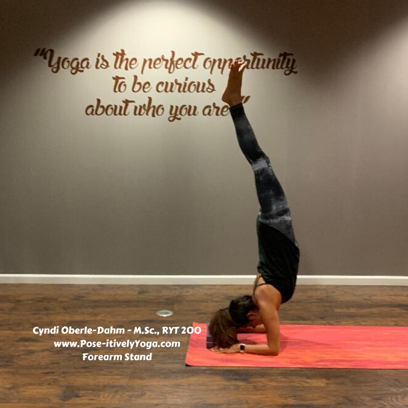 Cyndi Oberle-Dahm Yoga Teacher on Pose-itivelyYoga.com